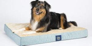 Top 10 Best Dog Beds in 2017