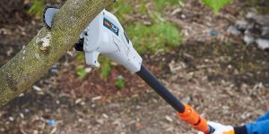 Top 10 Best Pole Saws in 2020 – Purchasing Guide – Top Brand Reviews