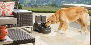 PetSafe Drinkwell Indoor:Outdoor Dog Fountain